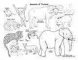 Habitat Desert Coloring Pages Ocean Habitats Animals Getdrawings Getcolorings Printable sketch template