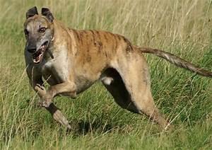 Vitesse Des Animaux : top 10 des animaux terrestres les plus rapides au monde ~ Medecine-chirurgie-esthetiques.com Avis de Voitures