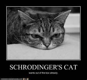 schrodingers cat schrodinger s cat walks into a bar and doesn t