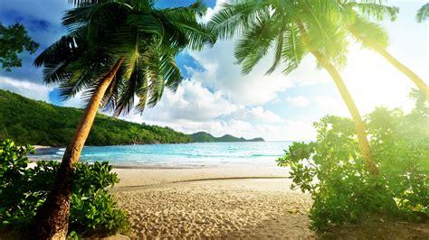 Tropical Sunlight Beach Palm Trees Hd Wallpaper Nature