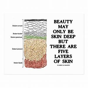 Beauty May Be Skin Deep But Five Layers Of Skin