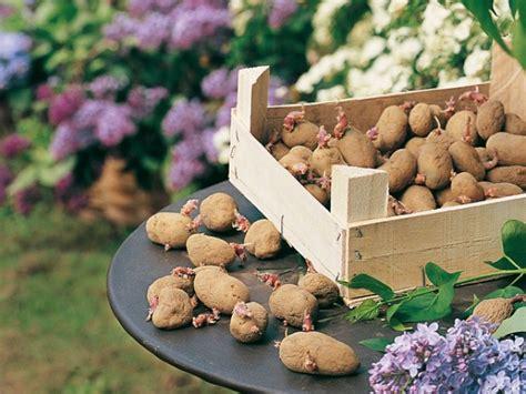 quelle couleur pour la cuisine culture de 33 variétés de pomme de terre