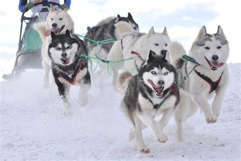 Dog Sled Extended Tour (2 People)