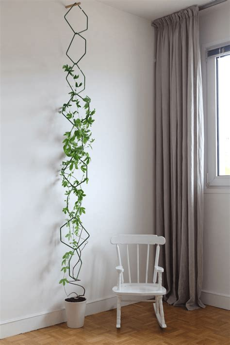 The Best Indoor Vines And Climbers That Are Easy To Grow