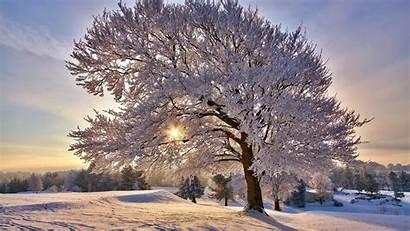 Winter Morning Landscape Wallpapers Desktop Desk