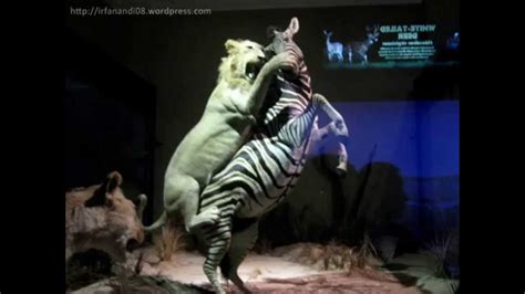 wisata batu secret zoo jatim park  batu malang youtube
