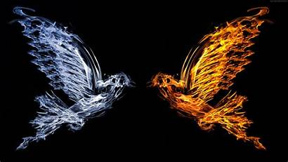 Fire Wallpapers Wings Cocaine Visual Bird Water