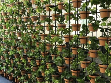 Vertical Garden Melbourne by Exhibition Plant Hire Melbourne Luwasa