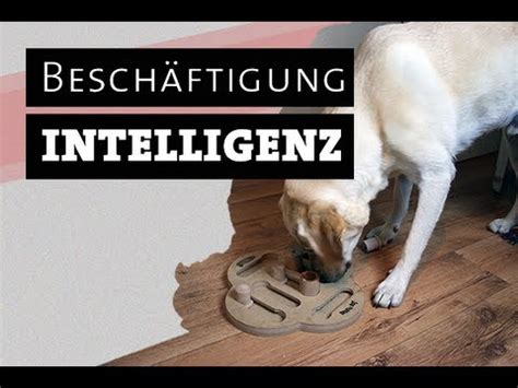 Hund Testet Intelligenzspielzeug  Hundespielzeug Selber