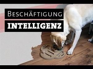 Hunde Intelligenzspielzeug Selber Machen : hund testet intelligenzspielzeug hundespielzeug selber machen besch ftigen besch ftigung ~ A.2002-acura-tl-radio.info Haus und Dekorationen