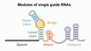 Team Advances Genome Editing Technique