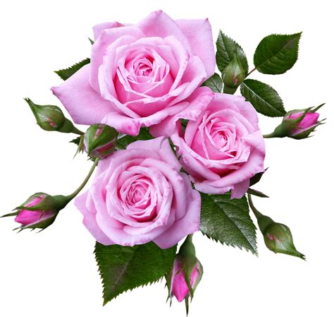 Free photo Flowers Roses Romantic Miniature - Max Pixel