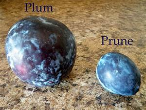 The Healing Kitchen  Plums And Prunes