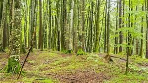 Bilder Vom Wald : waldbericht 2017 wald in bayern auf dem weg der besserung wissen themen ~ Yasmunasinghe.com Haus und Dekorationen
