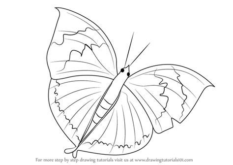 Learn How To Draw An Orange Oakleaf Butterfly (butterflies