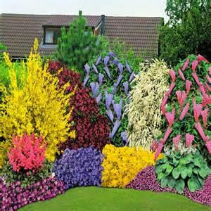 forsythia wreath 40 stauden kollektion 5 büsche günstig online kaufen