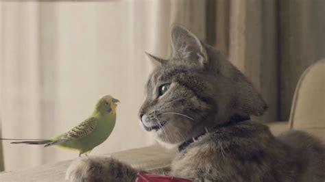 love   bounds  budgie  cat  charming