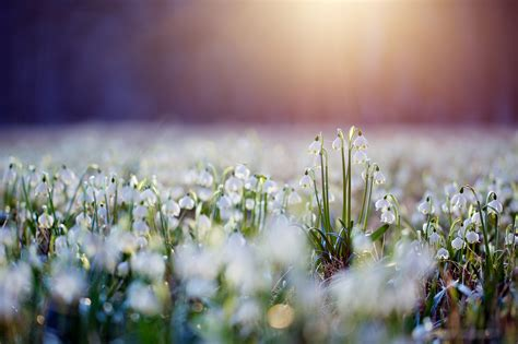 gorgeous   spring wildflowers topaz labs blog