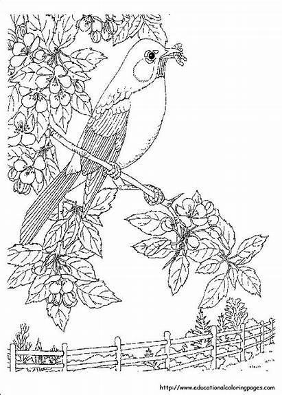 Coloring Nature Pages Printable Worksheets Adult Adults