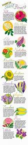 17 Best Images About Botany On Pinterest