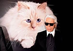 Choupette Chat Karl : karl lagerfeld non son chat choupette n h ritera pas de sa fortune elle ~ Medecine-chirurgie-esthetiques.com Avis de Voitures