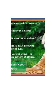#Interesting Facts about Tigers | Tiger facts, Pet tiger ...