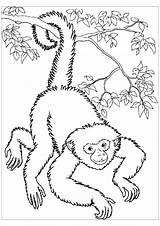 Coloring Monkeys Monkey Spider Printable Colouring Colour Children Adult Panama Getdrawings Getcolorings Justcolor sketch template