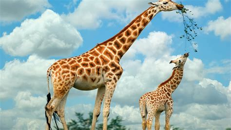 High Definition Animal Wallpapers - animals wallpapers high resolution 9to5animations