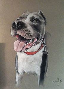 Pitbull in colored pencil by Inkredible-Designs on DeviantArt