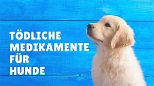 Medikamente Gegen Angstzustände : t dliche medikamente f r hunde was kann passieren wenn ~ Kayakingforconservation.com Haus und Dekorationen