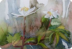 Aquarell Malen Blumen : buschwindr schen als aquarell bilder aquarelle vom meer ~ Articles-book.com Haus und Dekorationen