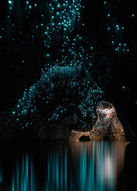 the cave and the light glow worms light up new zealand cave zuzog things