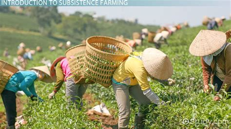 subsistence farming definition examples video