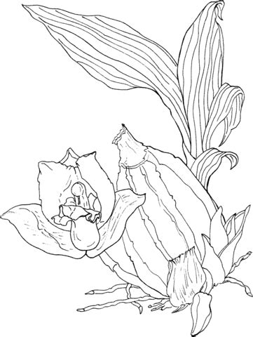 eyelash viper coloring pages coloring coloring pages