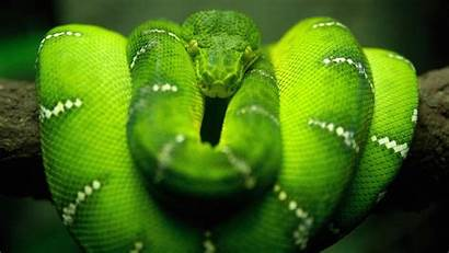 Snake Wallpapers Boa Sfondi Constrictor Cool Backgrounds