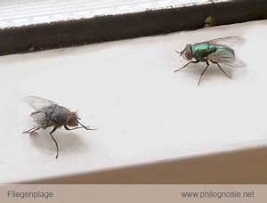 Fliegenplage Im Haus : fliegenplage fliegen aus dem haus vertreiben philognosie ~ Eleganceandgraceweddings.com Haus und Dekorationen