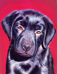 Pastel Dog Portraits Paintings
