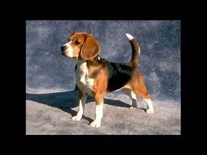 I 16 Cani Pi U00f9 Belli Al Mondo