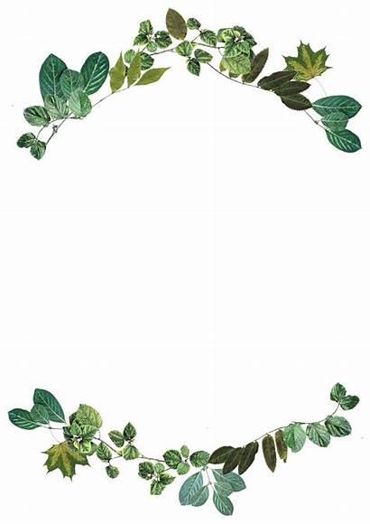 Border Leaf Nature Frame Leaves Foliage Pixabay