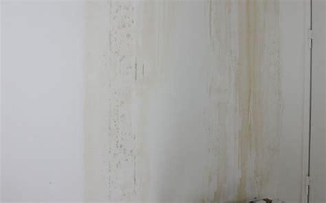 d 233 g 226 t des eaux r 233 novation d un appartement sur toulouse