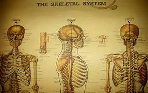 anatomy medical skeletons 1680x1050 wallpaper High Quality ...