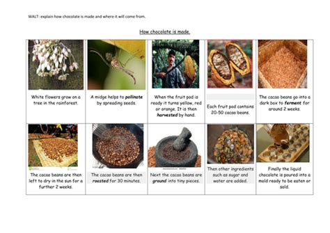 chocolate   flowchart teaching resources