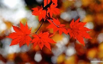 Leaves Autumn Fall Wallpapers Desktop Widescreen Tints