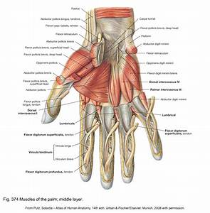 To Many Hand Tendons Diagram