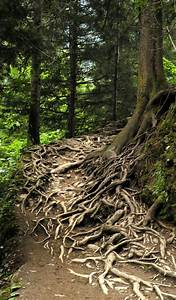 """Growing Roots"" 