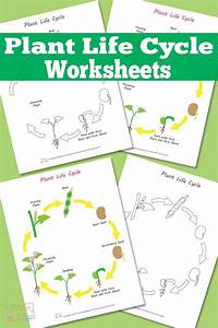 Plant Life Cycles  Life Cycles And Worksheets On Pinterest