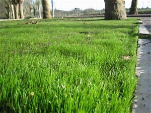 Semer Gazon Periode : mauvaises herbes mousse tout ~ Melissatoandfro.com Idées de Décoration