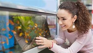 Algen Hauswand Entfernen Hausmittel : algen im aquarium so werden sie den l stigen tang wieder los ~ Frokenaadalensverden.com Haus und Dekorationen