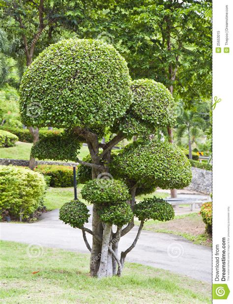 St Dunstan Garden City by Beautiful Dwarf Tree In The Garden Royalty Free Stock