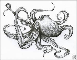 Giant Octopus Drawing | Scrimshaw Graphics | Pinterest ...